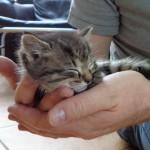 Eine Handvoll Katze---